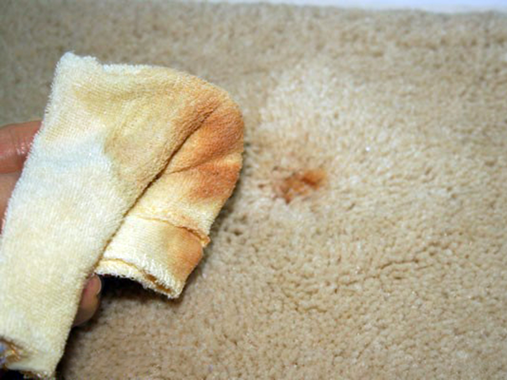 Tips and Tricks for Removing and Cleaning Carpet Stains